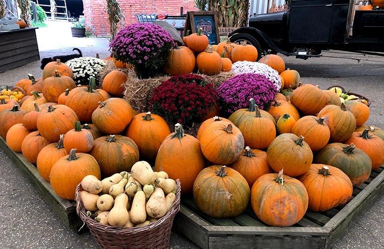 iPhone-8-camera-sample-pumpkin-patch