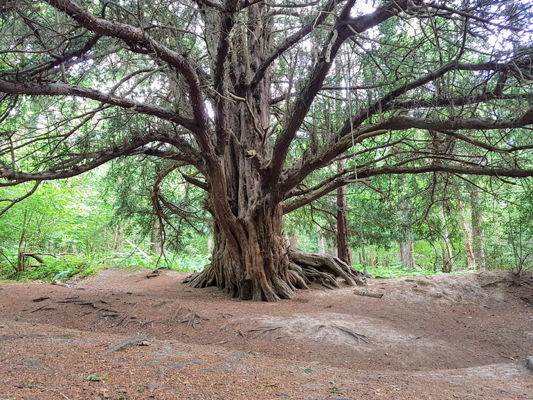 Landscape photography tree right angle