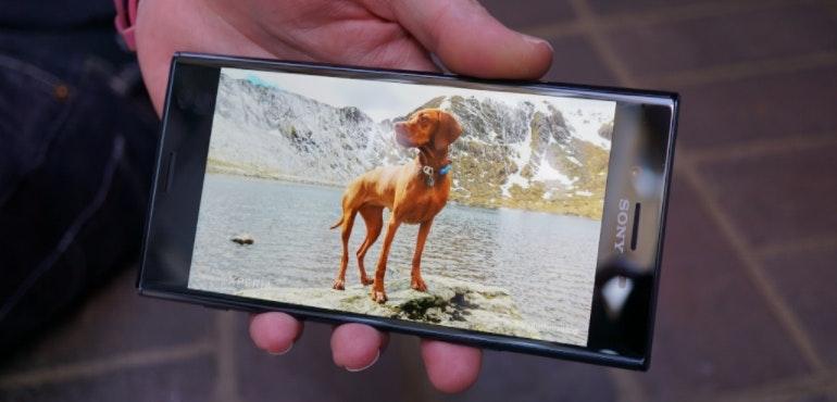 Sony Xperia XZ Premium dog image