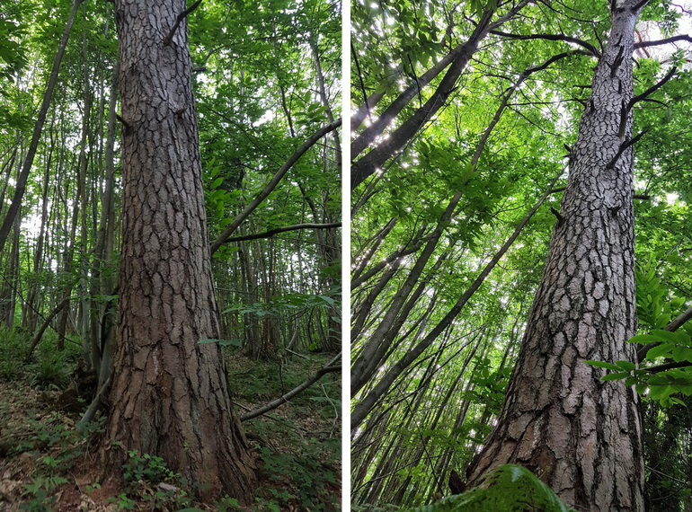 Landscape photography treetrunks left and right