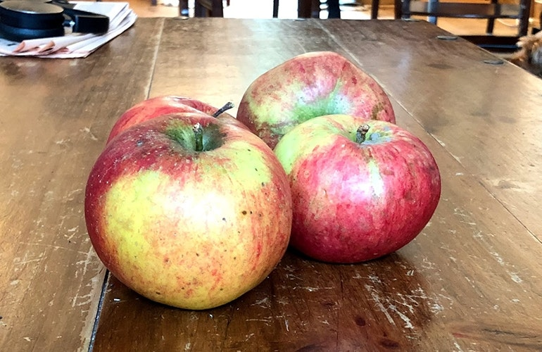 iPhone 8 apples standard lens
